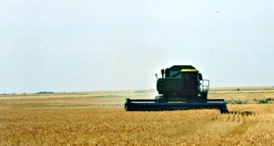 combine in wheat