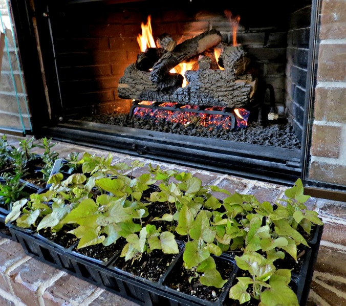 flowers by fireplace