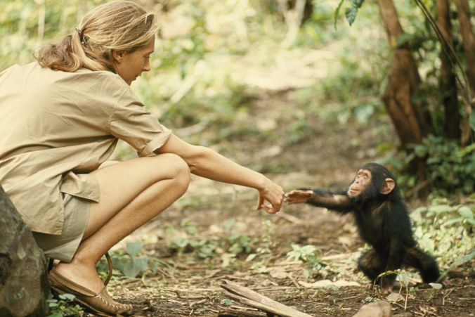 Jane and Chimp.jpg